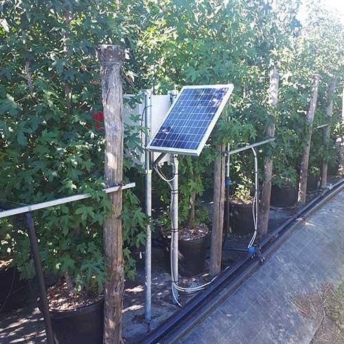 Monitoraggio coltivazione di Liquidambar CLT 35