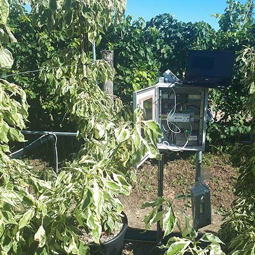 Monitoraggio coltivazione di Cornus Controversa  CLT55